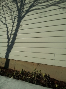 shadow autumn - real winter and spring