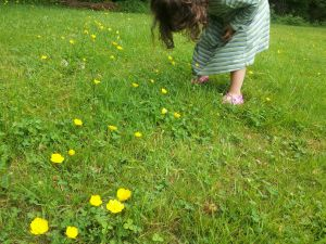 Flowergirl in the buttercups